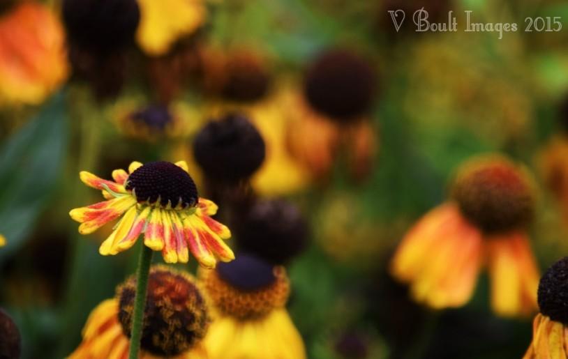 Flowers amongst the grey