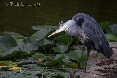 'Hello? Mr. Heron speaking'