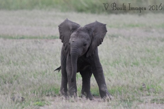 Bundle of baby elephant fun