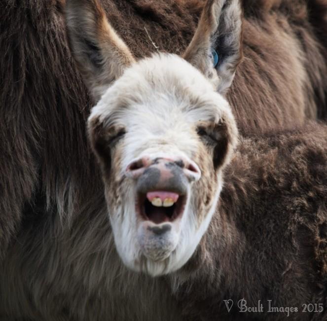 'Yawn!'
