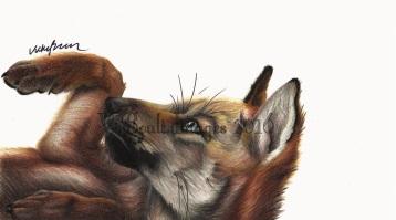 Mexican Wolf Cub